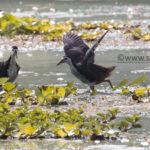 Basics of Birding : Families and activity