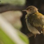 List of Common Birds : Part 2