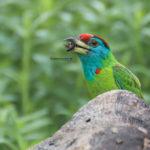 List of Common Birds : Part 3