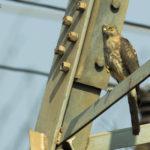 Birding in Bhubaneswar