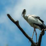 List of Common Birds : Part 4
