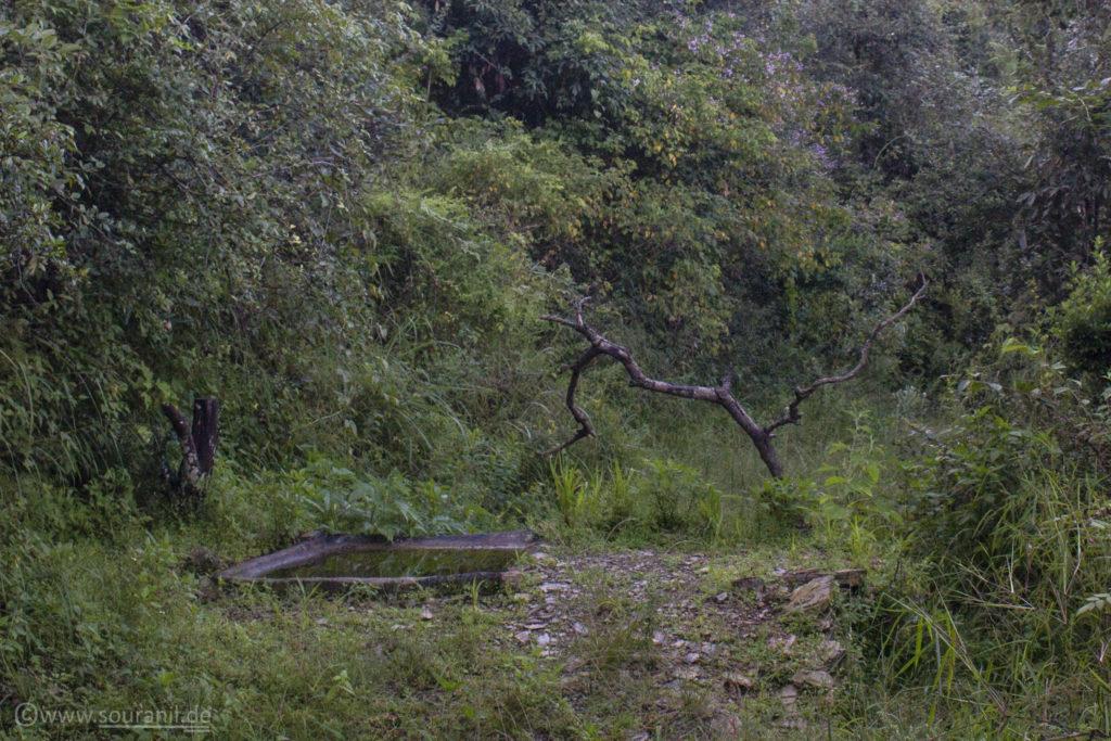 Jungle Lore Hide