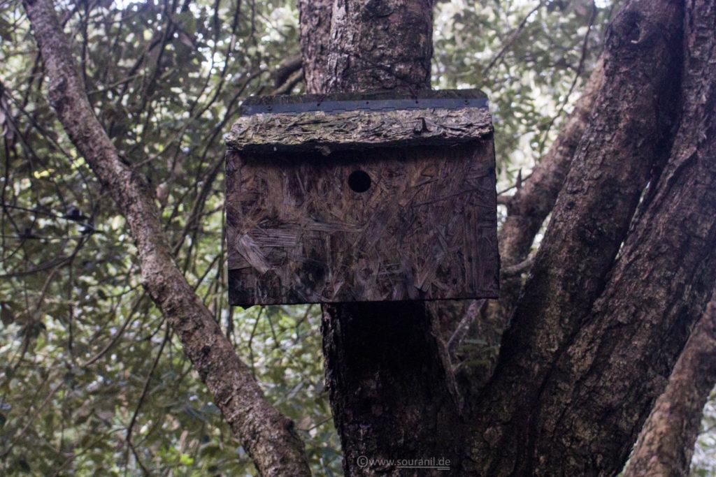 Jungle Lore Birdhouse