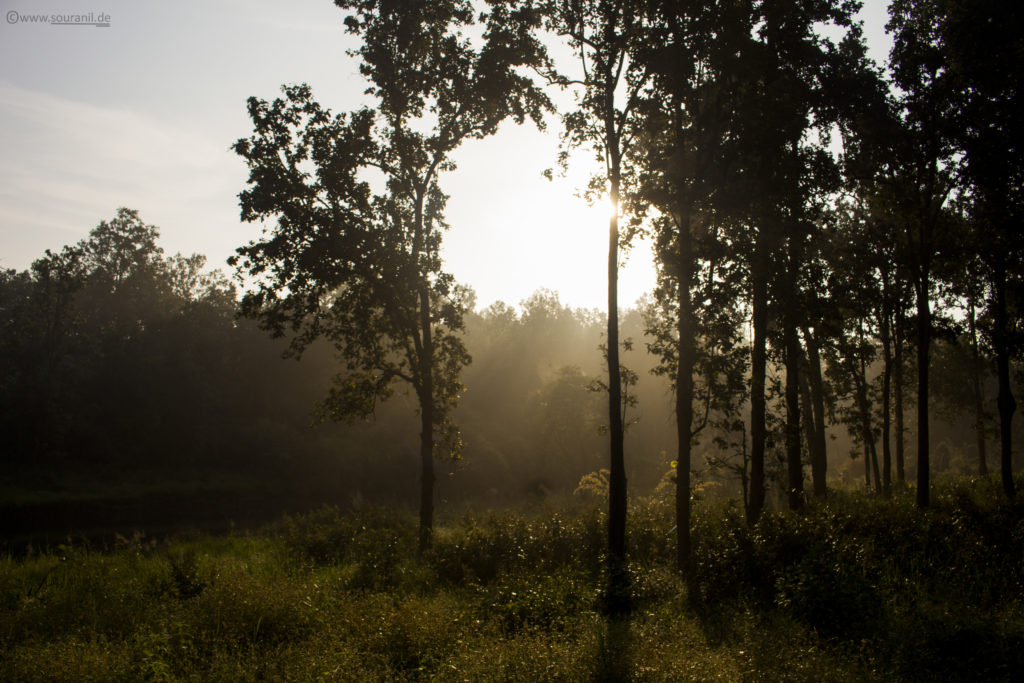 Kanha Sunrise