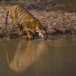 Tadoba : The Land of Tigers