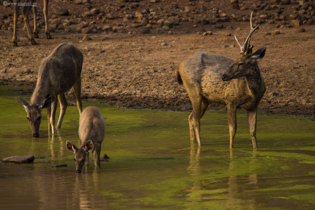 Tadoba National Park Wildlife